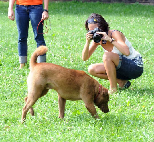 Victoria Schafer, who was killed in a tragic accident at Hocking Hills Monday,  doing volunteer work for the Humane Society in June 2014.