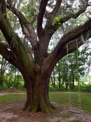 Heritage live oak trees provide shade and relief from summer's scorching sun.