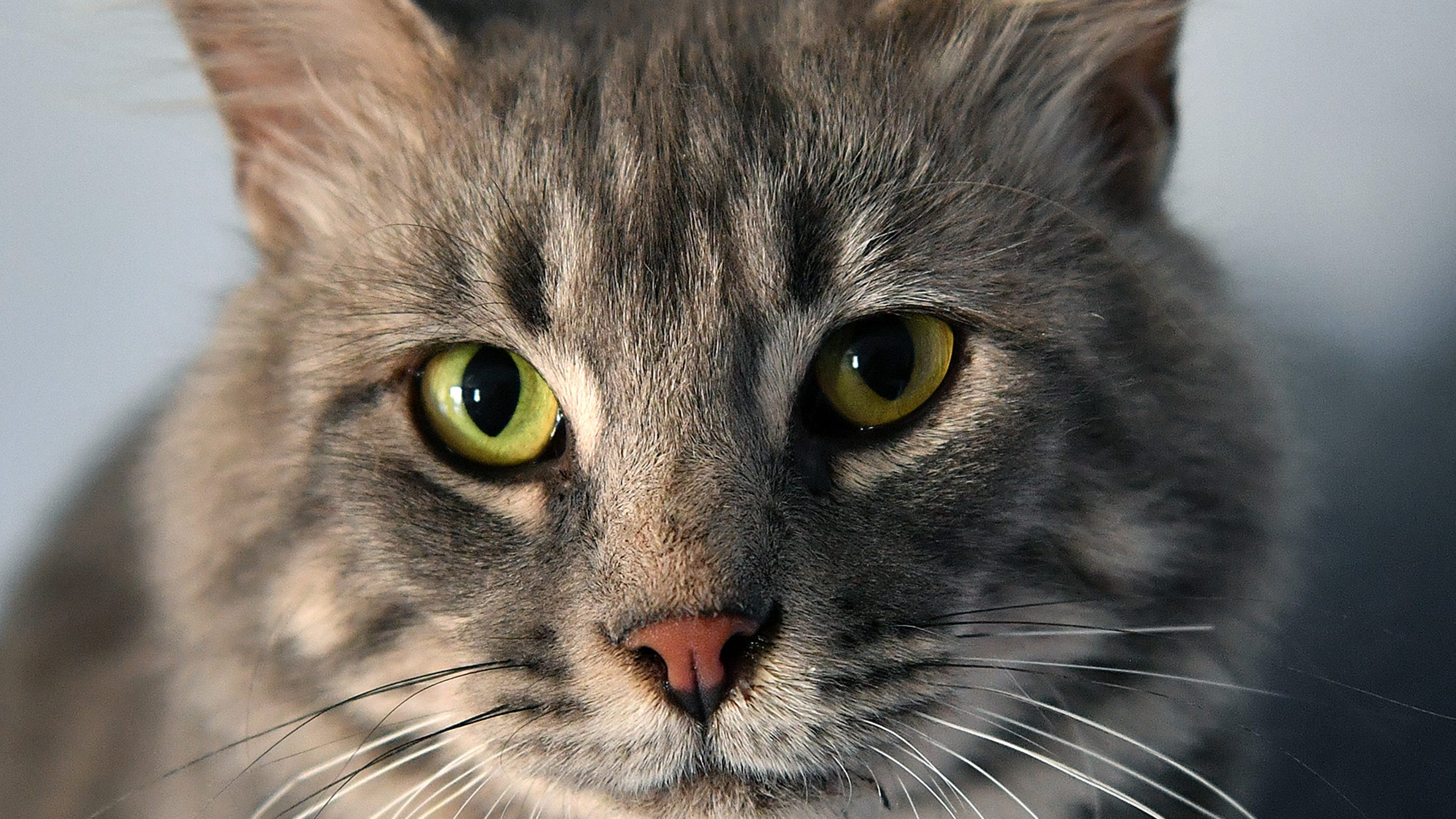 Cat owners reflect joyous day of naming their feline friends