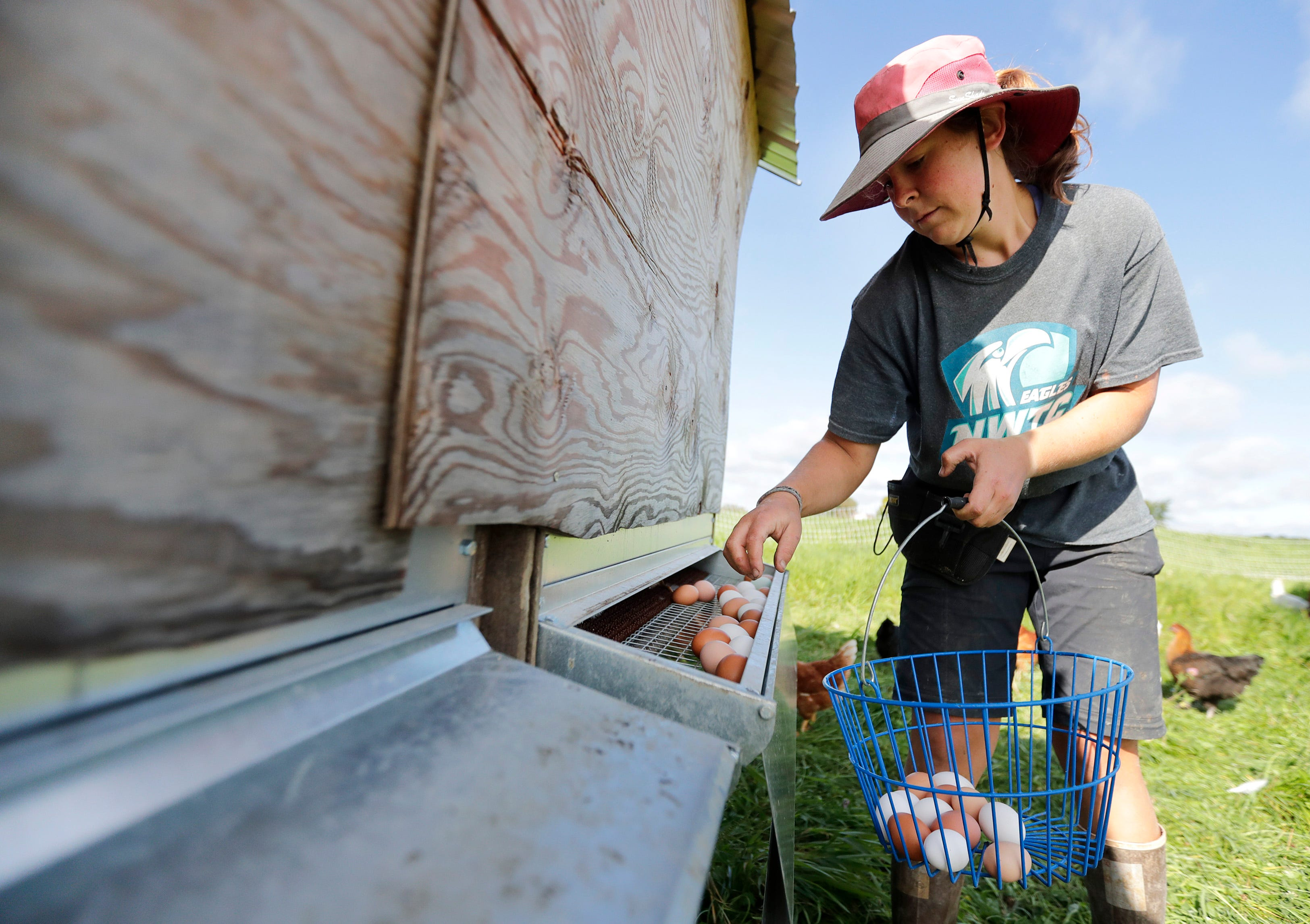 Heather Toman, with Full Circle Community Farm, collects eggs Tuesday, Aug. 27, 2019 in Seymour, Wis.
