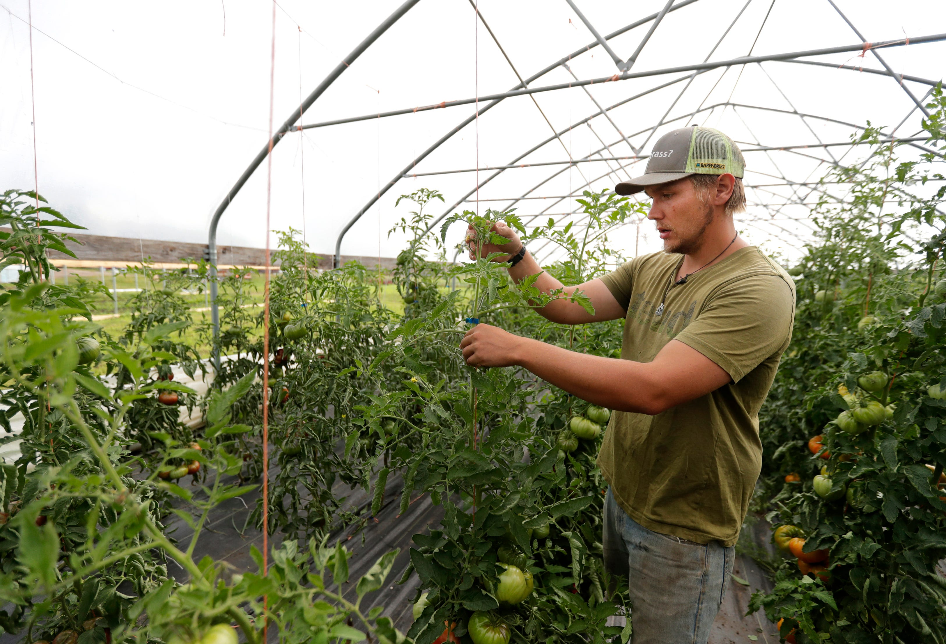 Andrew Adamski, son of Full Circle Community Farm's owners Rick Adamski and Valerie Dantoin, looks through tomatoes on their farm Tuesday, Aug. 27, 2019 in Seymour, Wis. Andrew with be inheriting the farm for a fifth generation with his partner Heather Toman.
