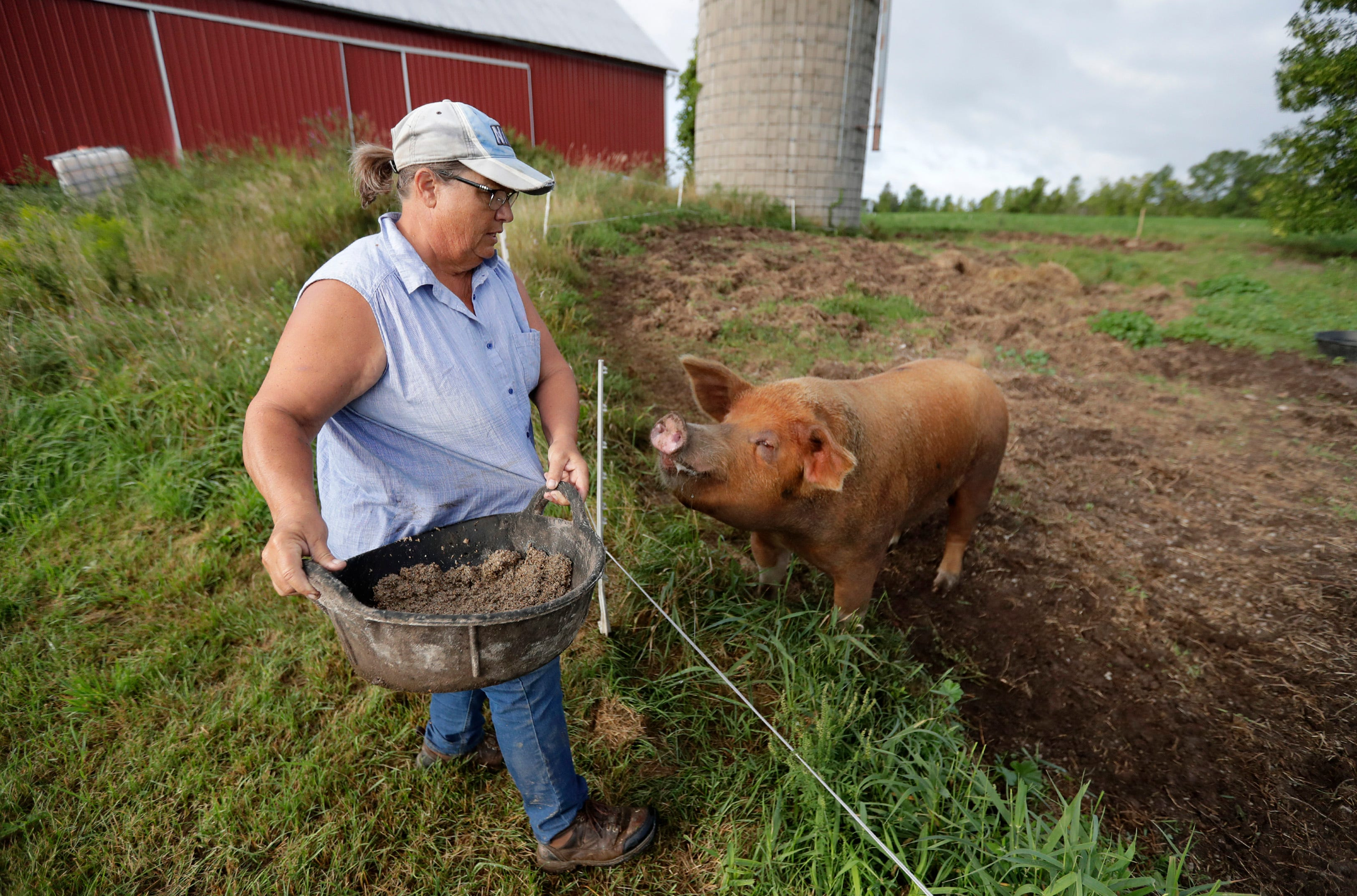 Valerie Dantoin, owner of Full Circle Community Farm, feeds Thick Boy, the farm's breeding boar, Tuesday, Aug. 27, 2019 in Seymour, Wis.
