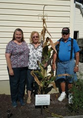 The Jacovelli family - Jean (from left) and her parents Virginia and Matt - proudly display the certificate their cornstalk received from Rutgers Cooperative Extension of Gloucester County. Armed with proof of 29 cobs, the Deptford family has applied for a Guinness World Record.