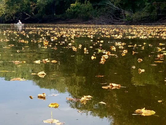 Leaves float on the Wapsipinicon River as it flows past Cortright Wildlife Area near Independence, Iowa.