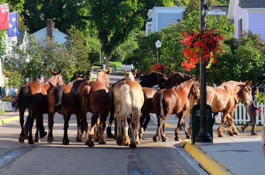 Horses march down Main Street on Mackinac Island toward Arnold Freight Co. to depart the island for the year on Wednesday, Sept. 4, 2019.