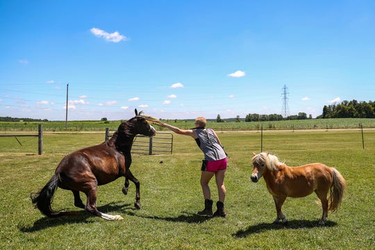 Jessie Lanzer works with horses at her family's home in Losantville, Indiana, about 16 miles east of Muncie.