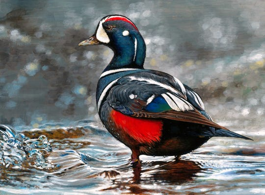Acrylic painting of a Harlequin duck, by 16-year-old New York resident Nicole Jeon, has been made into the 2019-2020 Federal Junior Duck Stamp.