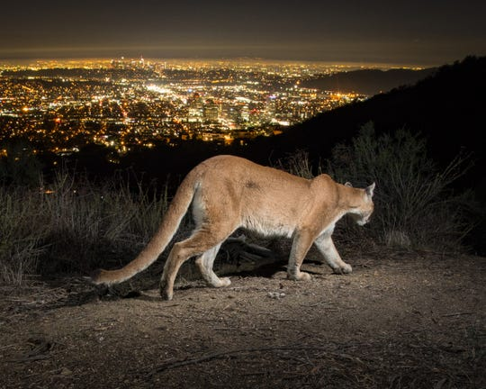"Photographer Johanna Turner will be available 1-3 p.m. Sept. 7 at her exhibit ""Night Visions"" at the Santa Monica Mountains Visitor Center in Calabasas."