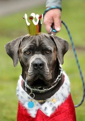 The Wheaton Barks Dog Show, part of Paws for Art, will be held at 2:30 p.m. Sept. 7 at Wheaton Arts and Cultural Center at 1501 Glasstown Road in Millville.
