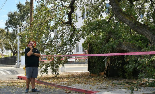 A massive valley oak tree branch fell and crushed Pita Kabob's patio in downtown Visalia on Sept. 4, 2019.