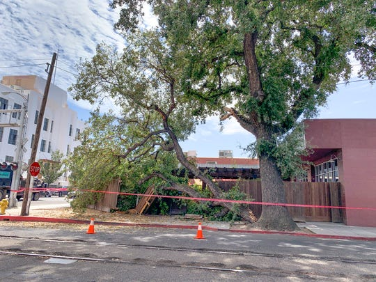 A fallen limb from an oak tree just outside Pita Kabob at Court an Oak streets damaged the fence around the patio of the restaurant.