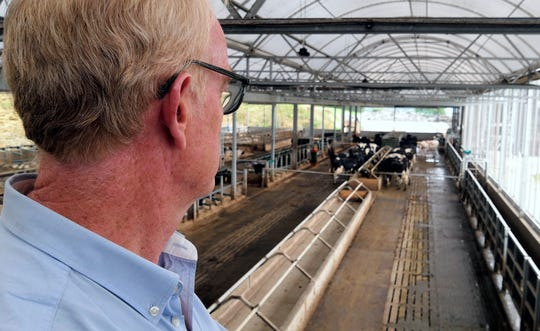 In this photo taken on Wednesday, Aug. 28, 2019, project manager Duncan Forbes looks out at herd of cows at Agri-EPI Centre, a dairy development center in Shepton Mallet, England.