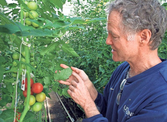 If late season green tomatoes are close to maturity, they may also ripen after picking. And there's always fried green tomatoes.