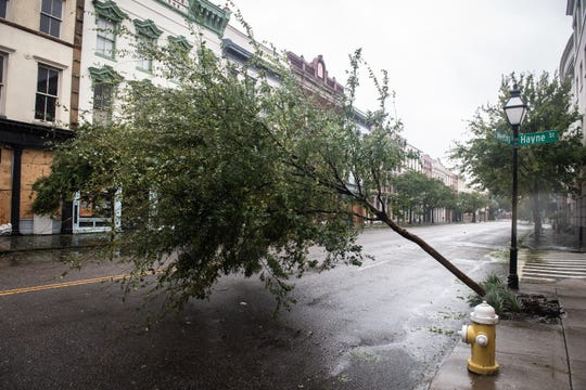 A tree sits aslant on Meeting Street in Charleston, SC during Hurricane Dorian Thursday, September 5, 2019. The storm center was 80 miles south-southeast of Charleston at 7 a.m. packing sustained winds of 115 mph, according to the National Hurricane Center.