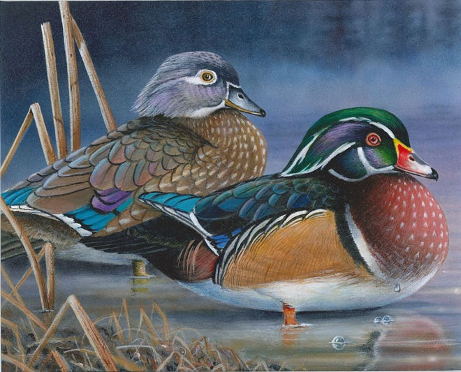 This painting of wood ducks by Robert Metropulos of Arbor Vitae, Wisconsin,  won the design contest for the 2020 Wisconsin waterfowl stamp. Proceeds from sales of the stamp, required of duck and goose hunters in Wisconsin, raises money for managing, restoring and protecting habitat for waterfowl and other wildlife.
