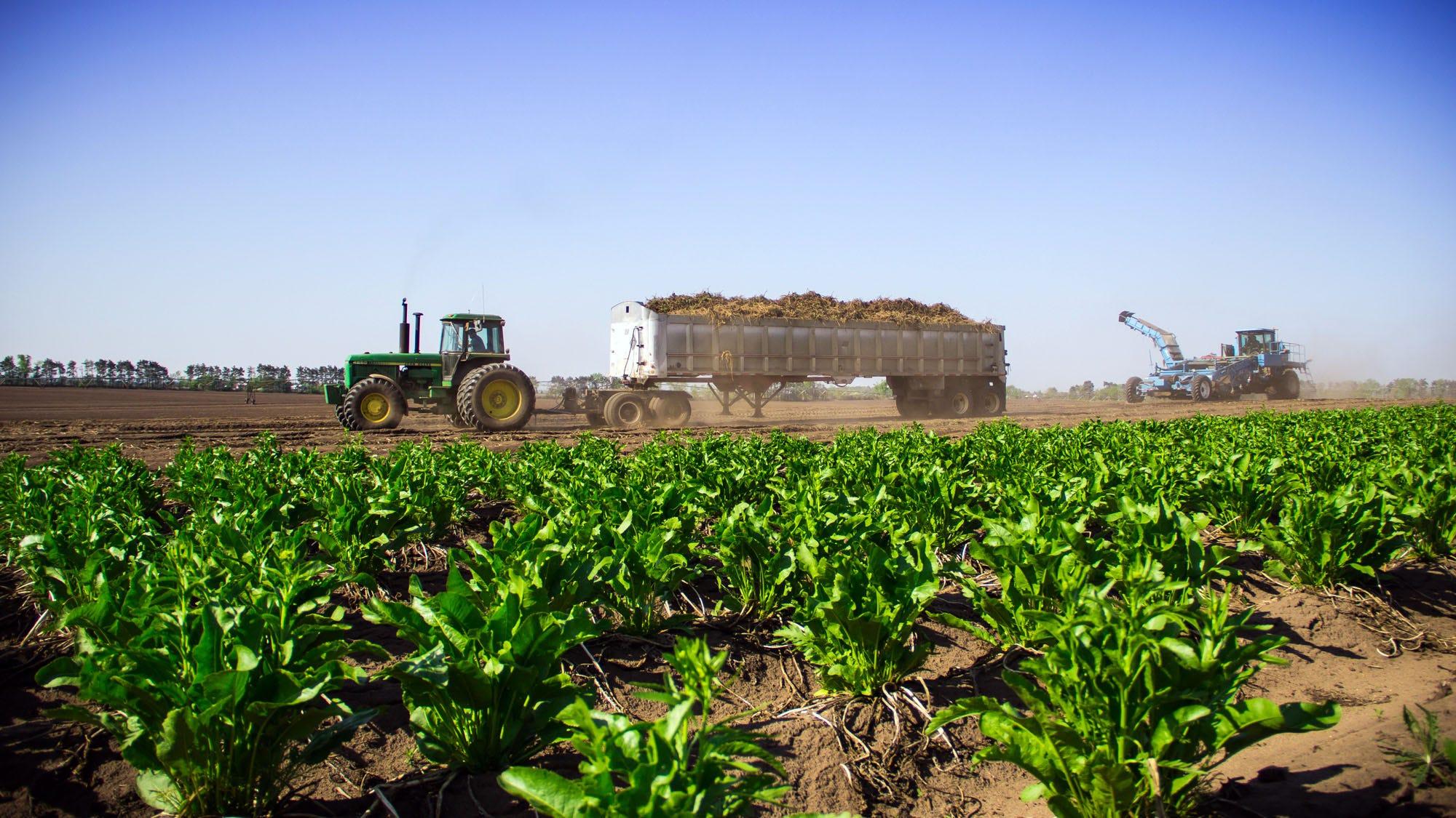 The world's largest producer of horseradish warns of shortage