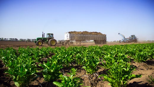 World's largest horseradish producer is near Eau Claire, on a family farm started by a German immigrant