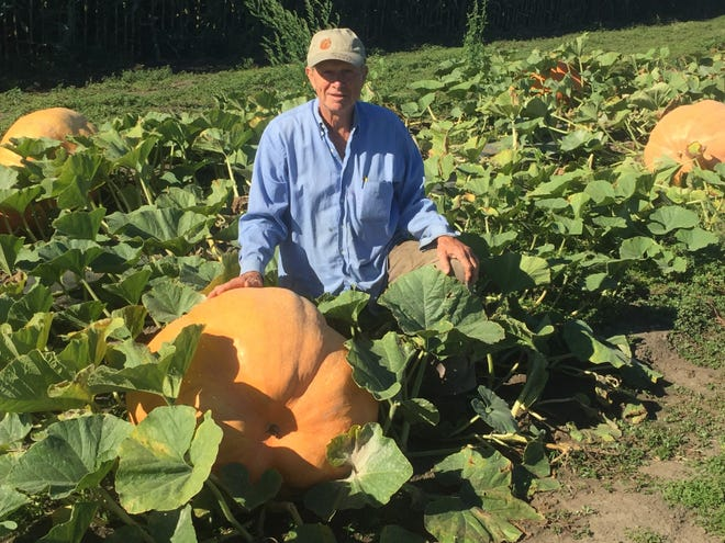 Ralph Jutte of Pigeon Roost Farms with one of the unusually large pumpkins grown this year, weighing in at approximately 250 pounds.