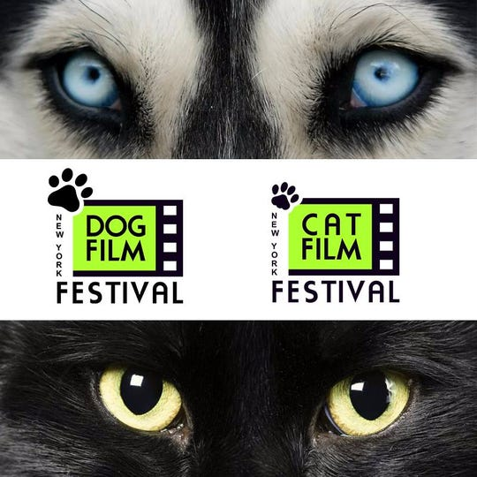 The NY Dog Film Festival and NY Cat Film Festival are playing at Small Star Art House.