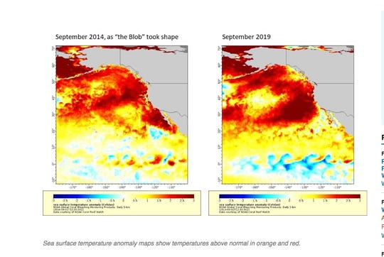 "A ""Blob"" of warm water may be returning to the West Coast, impacting fish and wildlife, officials said Thursday. This picture shows sea surface temperature similarities between September of 2014 and 2019."