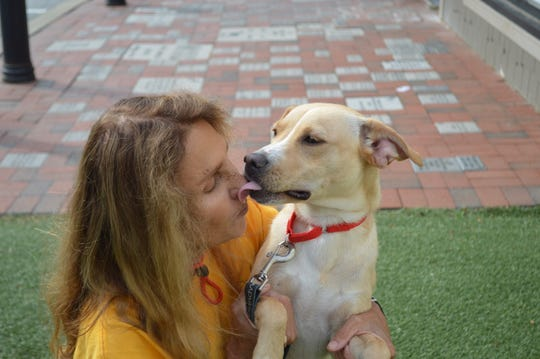 Amelia, a 6-month old retriever mix, licks Brandywine Valley SPCA volunteer Cathy Lakoff. Amelia was evacuated from the path of Hurricane Dorian and transported to Delaware.