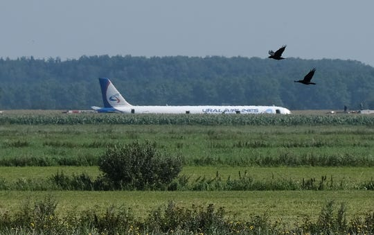 """In August, a Urals Airlines pilot pulled a """"Sully,"""" safely landing his A321 in a Russian cornfield after a bird strike disabled both engines."""