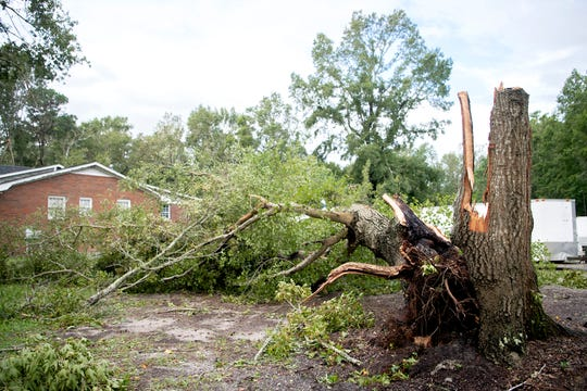 A tree is damaged in a yard in Myrtle Grove near Carolina Beach, North Carolina on Sept. 6, 2019. Residents described hurricane-like winds on Sept. 5, 2019.