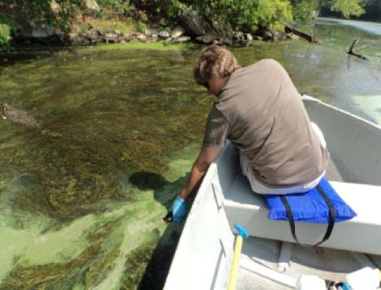 State Department of Enviromental Protection worker tests growth in lake water this summer for presence of bacteria harmful to humans, pets and wildlife