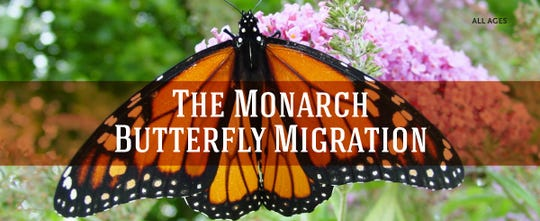 The Des Moines Public Library is hosting several monarch tagging events this month.