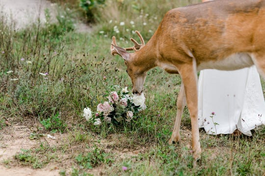 The bride forfeited her Melissa Anne Floral Co. bouquet to the hungry deer.