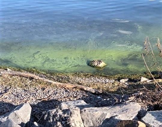 An outbreak of cyanobacteria, also known as harmful algal bloom, appears on the Seneca Lake shoreline near Geneva.
