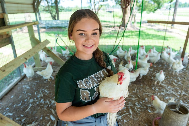 Kennedy Pellerin holds a white leghorn chicken on Acadiana High's campus on Thursday, Sept. 5, 2019.