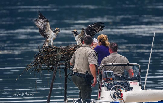 Osprey were returned safely to their nest after a rescue earlier this year at Kensington Metropark. A storm knocked the birds out of their nest. Police officers with the Metroparks helped members of the Michigan Osprey organization get the birds back into their nest because they hadn't learned how to fly yet.