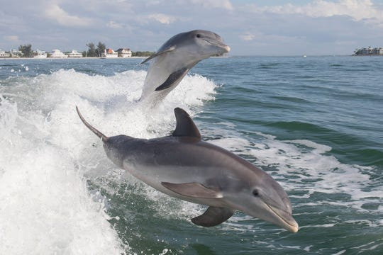 Tory Kallman grew up going on fishing trips with his dad and identical twin brother Reid near Sanibel Island, Florida. Sanibel is well-known as a great place to take pictures of dolphins.