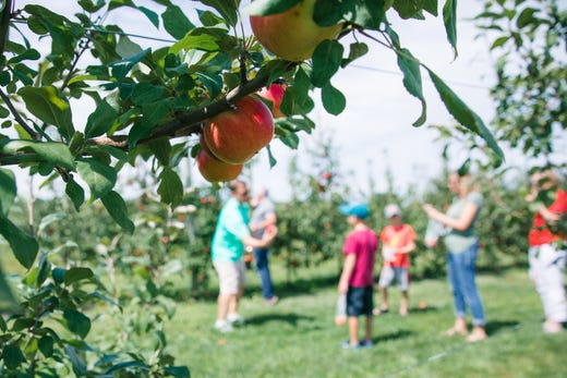 This apple tree maze near Lake Geneva might be the first of its kind in the country