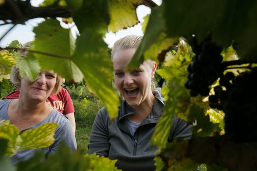 Megan Hanson of West Des Moines and Julie Bridel of Rochester, Minn., peek through the leaves. The Summerset Winery hosted the annual grape harvest on Sept. 7 giving wine fans an opportunity to pick grapes in the vineyard.
