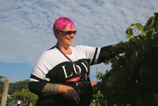 Kim Weir of West Des Moines searches for grapes among the leaves. The Summerset Winery hosted the annual grape harvest on Sept. 7 giving wine fans an opportunity to pick grapes in the vineyard.