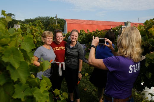 Linda Mark takes a snapshot of some of the grape harvesters. The Summerset Winery hosted the annual grape harvest on Sept. 7 giving wine fans an opportunity to pick grapes in the vineyard.