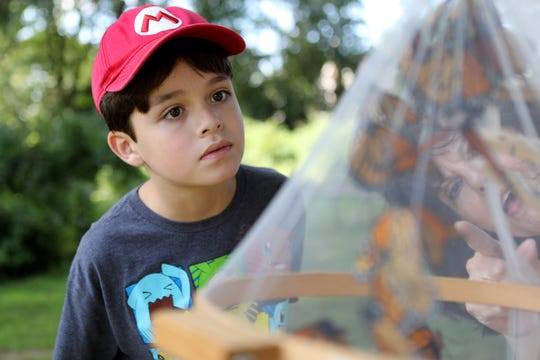 Ben Mattiace, 9, of Ridgefield Park, looks at monarch butterflies with Linda Flynn (behind netting), at the annual Butterfly Festival, at the Garretson Forge and Farm, in Fair Lawn.  Sunday, September 8, 2019