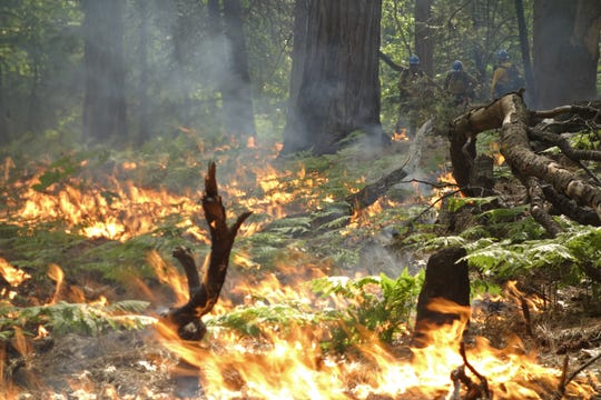In this June 11, 2019 firefighters keep an eye on a prescribed burn in Kings Canyon National Park, Calif. The prescribed burn, a low-intensity, closely managed fire, was intended to clear out undergrowth and protect the heart of Kings Canyon National Park from a future threatening wildfire. The tactic is considered one of the best ways to prevent the kind of catastrophic destruction that has become common, but its use falls woefully short of goals in the West.