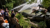 Cincinnati firefighters, as part of Hometown Hero Week at the Cincinnati Zoo and Botanical Garden used their fire hoses to give elephants a shower.