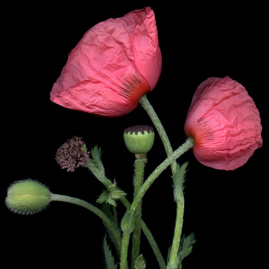 "A botanical print by photographer Laurie Tennent will be auctioned off at the preview party Sept. 19 for the Garden Club of Michigan's ""By the Lake"" Garden Show."