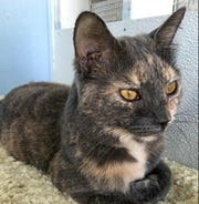 Crystal is a 3-year-old cat looking for a home.