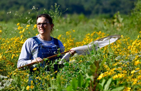 A participant in last weekend's Monarch butterfly tagging event scans a field at the Sloughs Wildlife Management Area in western Henderson County.
