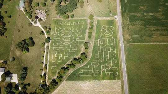 Hogan Farms honors the Chinese zodiac with the Year of the Pig corn maze and has an outline of Indiana for 2019.