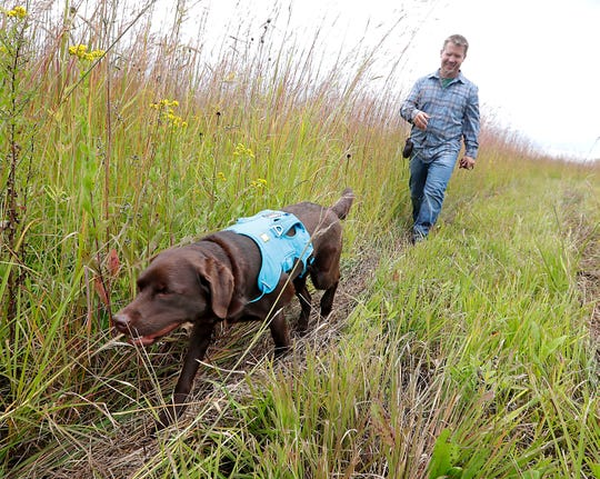 "Tilia is a special conservation dog, sniffing out invasive species like wild parsnip and animals like salamanders  at the Mequon Nature Preserve. Since late 2016 Cory Gritzmacher, the preserve's director of restoration and operations, has worked as her handler, training her inside and in the field to distinguish ""target scents"" from everything else around her. Trainers hide target scents in containers, under logs and among flowers. When she comes upon a target scent she alerts her handler and she gets a treat."