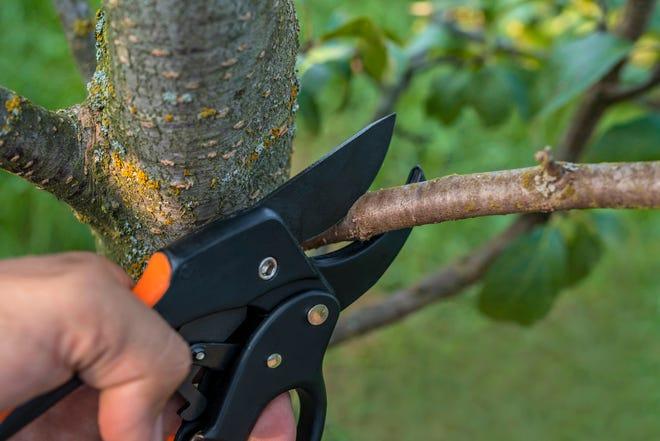 Gardener hand with garden secateurs on natural green background.