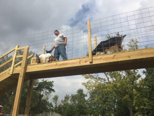 """Mark Van Buren with some of the petting goats on the new """"goat-walk"""" at Van Buren Acres."""