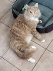 Gaara is available for adoption at 10807 N. 96th Ave. in Peoria. For more information, call 623-773-2246 after 10 a.m.