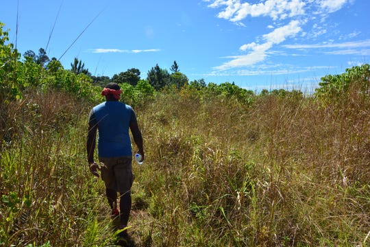 Walking through tall grass at the start of the trail in Fiji.
